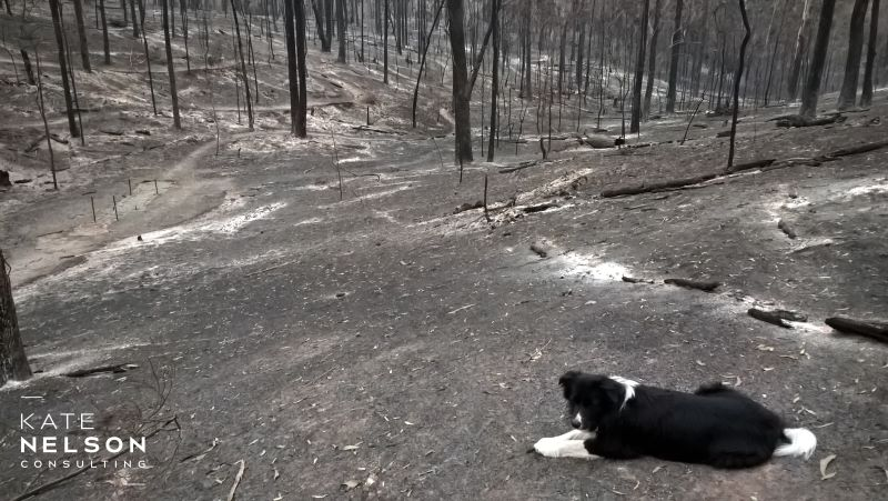 There are always lessons to be learnt – The Aftermath: 2019-20 Fires in Sarsfield East Gippsland